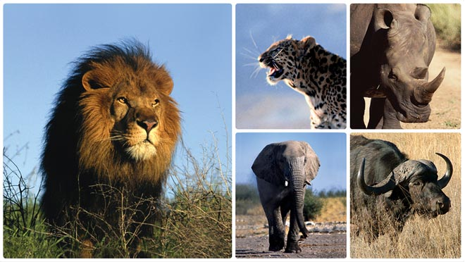 Africa safari south african big game hunting and plains for Big 5 fishing license